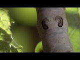 Дикий Китай.Film 4: Beyond the Great Wall / По ту сторону стены